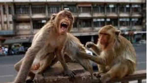 Monkey B Virus: ఆ డేంజరస్ వైరస్కు వెటరినరీ డాక్టర్ బలి: తొలి మరణం..అదీ చైనాలోనే