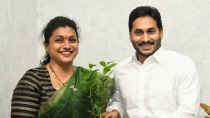 Mla Roja Will This Firebrand Be Induced Into Jagan S Cabinet Interesting Debate In Ysrcp Circle