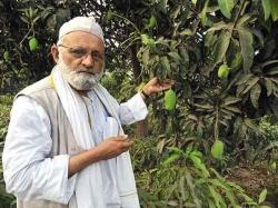 Mango Cultivator Haji Kalimullah Khan S Dedication Modi