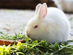 Rabbits Found On Ahmedabad Airport Runway Collision Planes