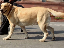 Pet Dog Dies Saving Woman From Knife Wielding Intruder Mumbai