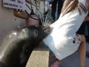 Dramatic Video Captures Sea Lion Dragging Little Girl Into Water From Pier